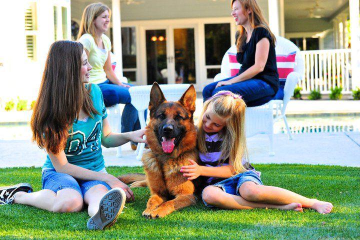 【老友狗狗】小朋友與德國牧羊犬之教教豬時光