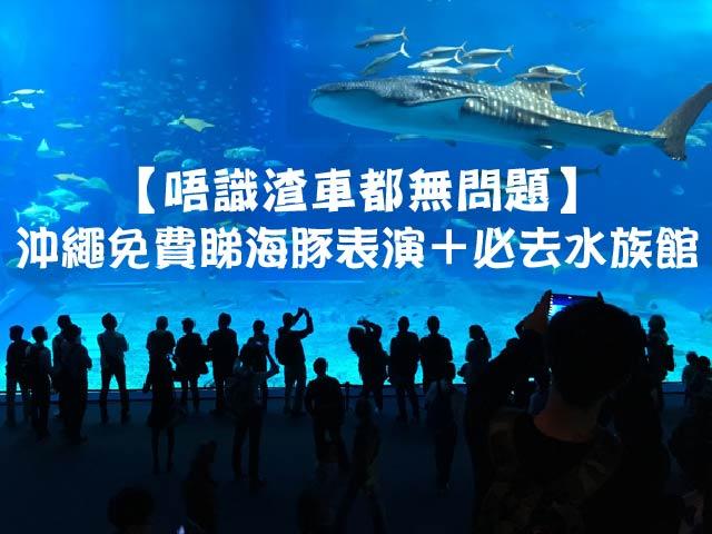 【唔識揸車都無問題】沖繩免費睇海豚表演+必去水族館