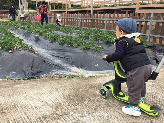 【親子好去處】11萬呎有機農莊玩足大半日