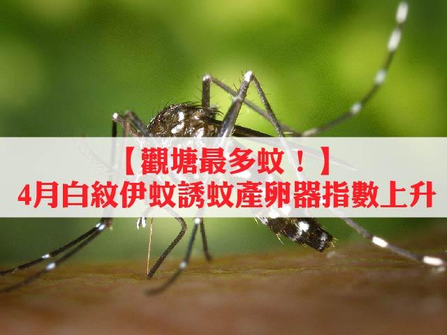 【觀塘最多蚊!】4月白紋伊蚊誘蚊產卵器指數上升